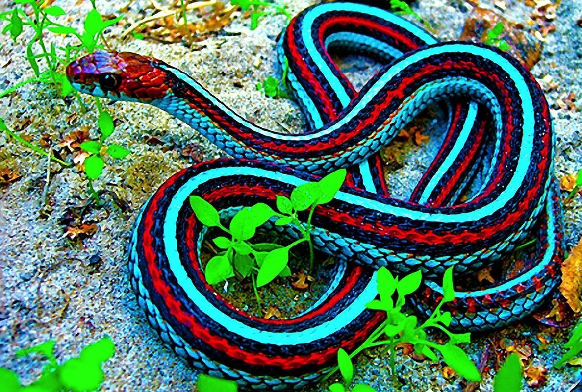 Snake Wallpapers Wallpaper