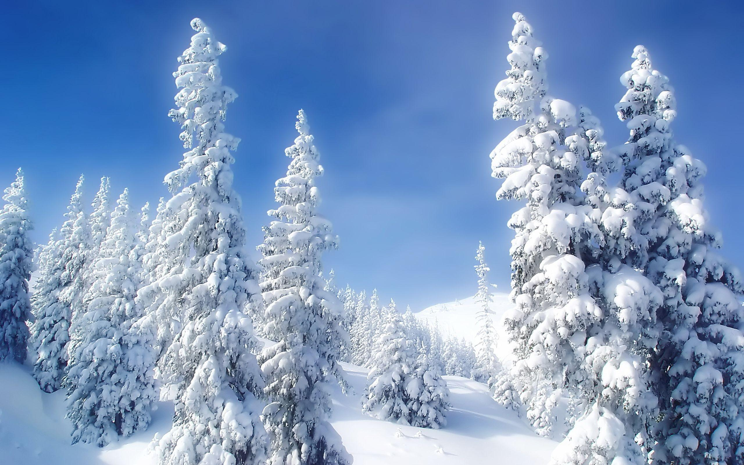 Landscapes Nature Winter Snow Trees Blue Skies High 2560x1600