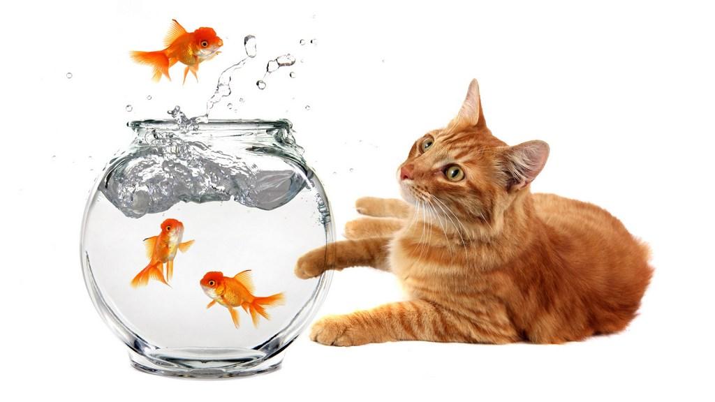 Черный котенок с золотой рыбкой  № 2955002 без смс