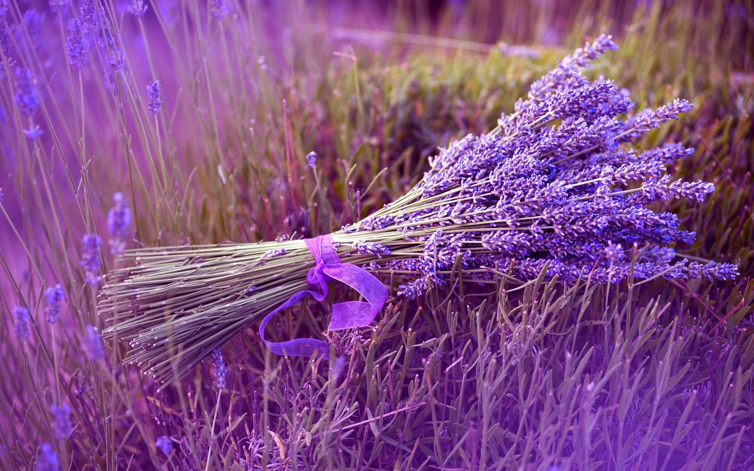 Lavender Purple Flowers On Farm Wallpaper Down 8812 2560x1600