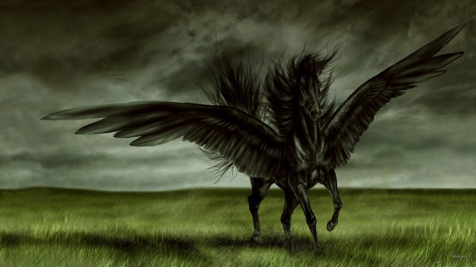 All Wallpapers Black Horse New Best Hd 2013 1600x900