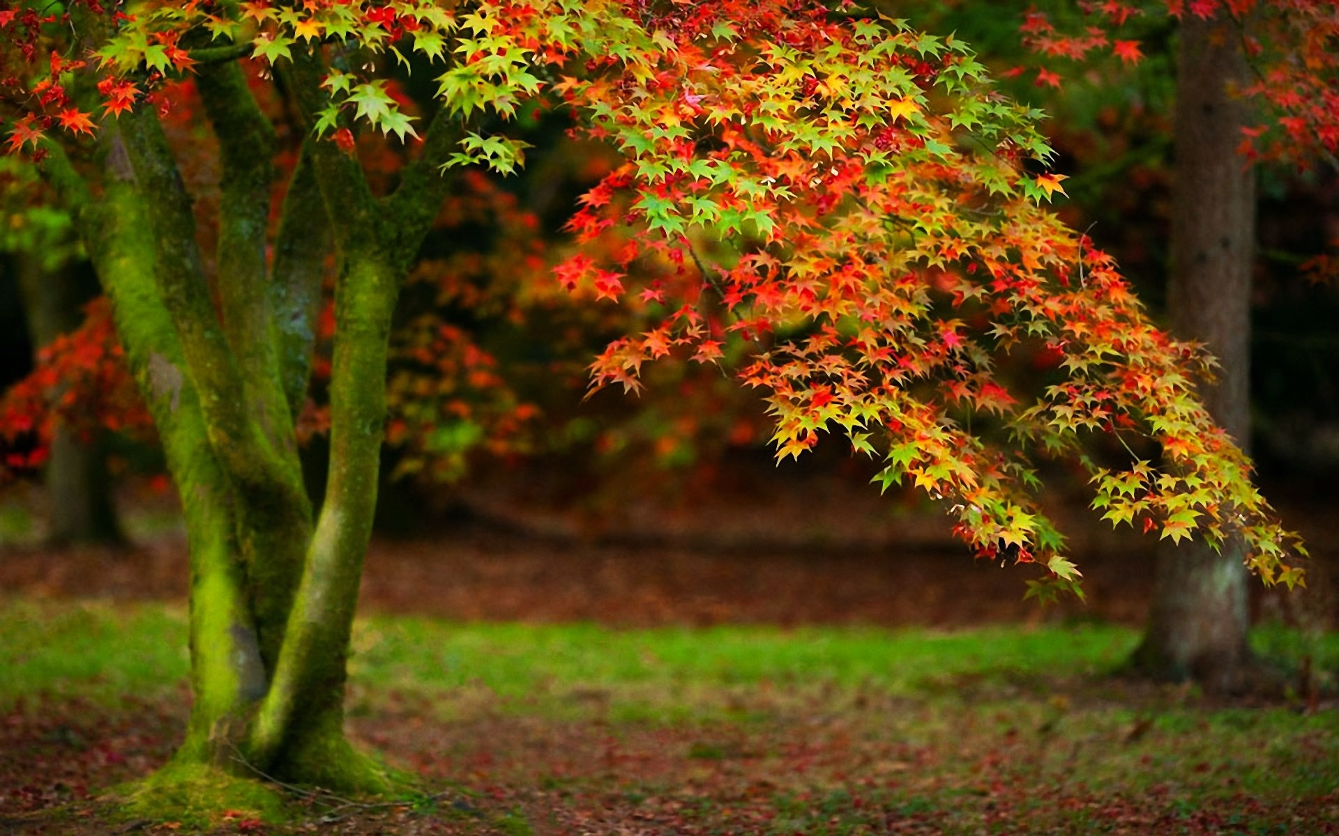 beautiful trees wallpaper wallpapersafari