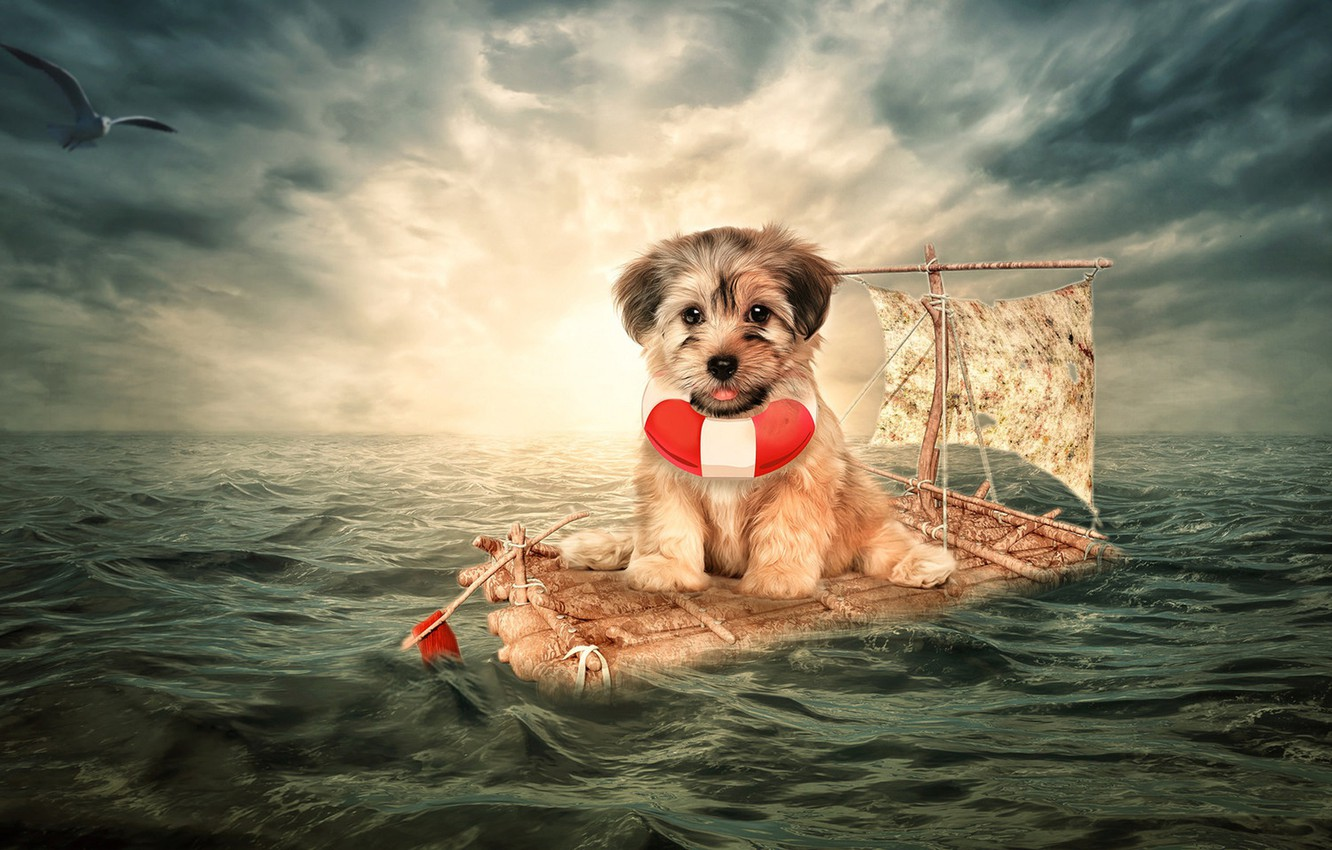 Wallpaper sea the situation dog Seagull puppy the raft 1332x850