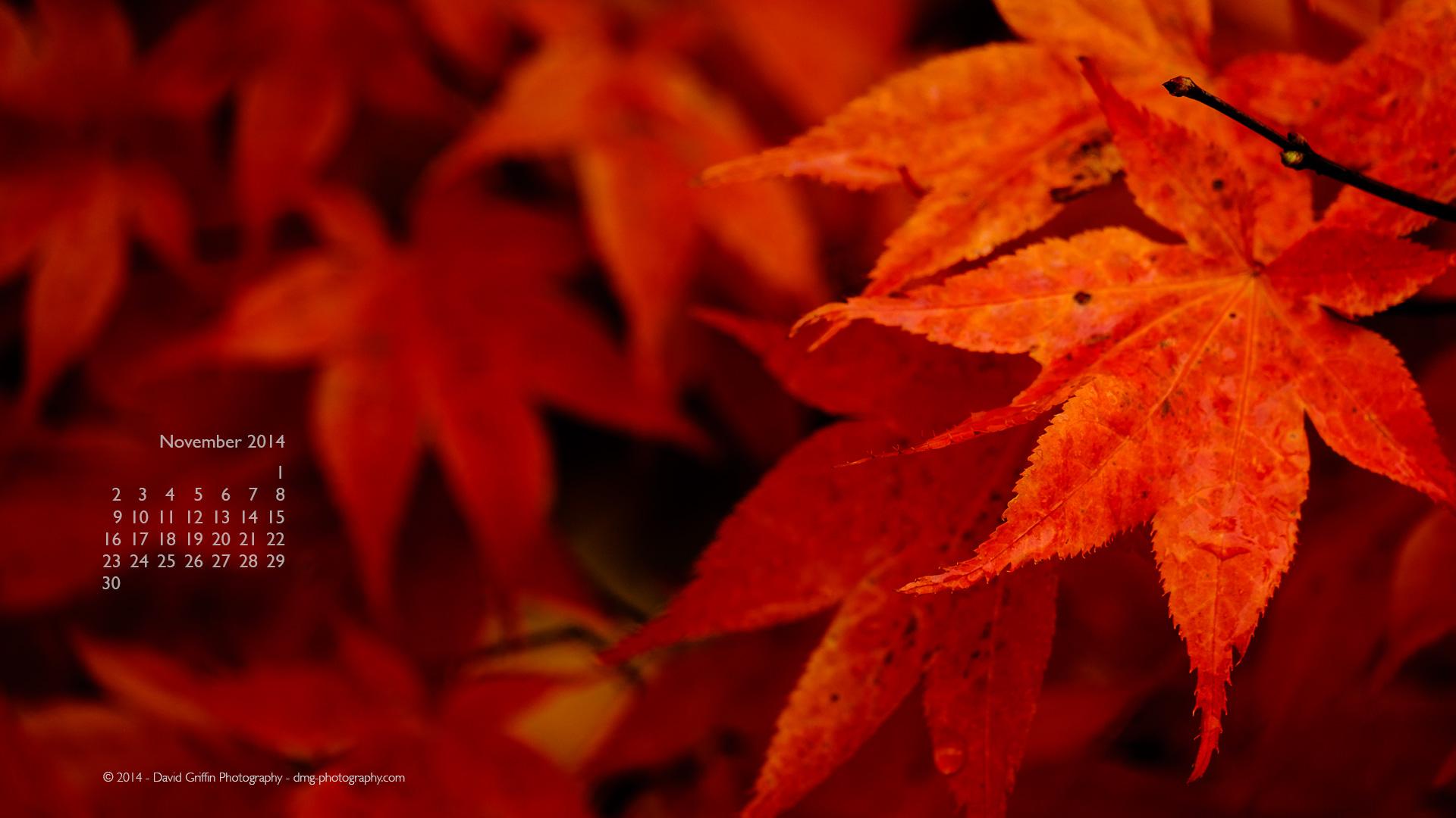 November 2014 Wallpaper David Griffin Photography 1920x1080