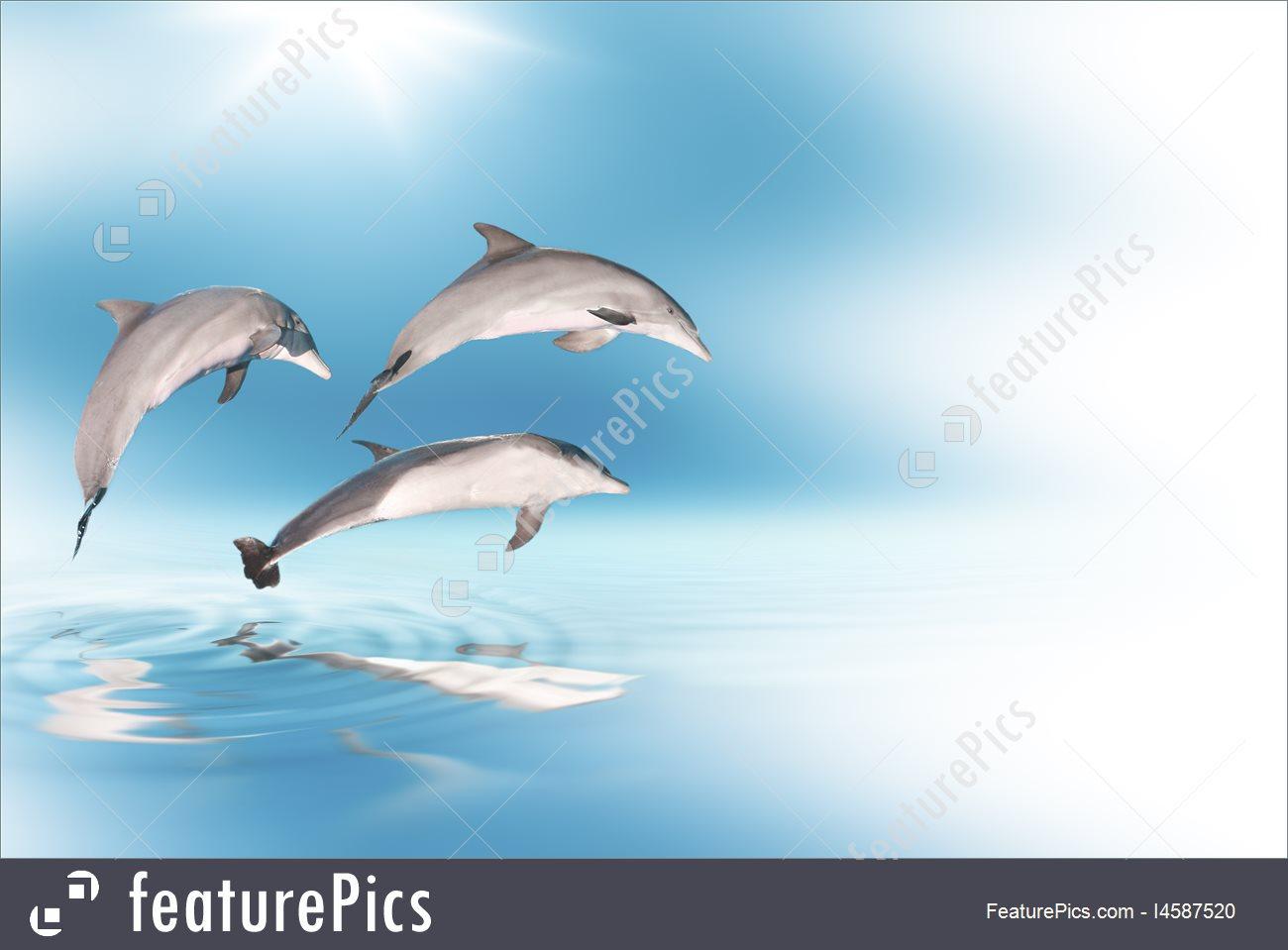 Wildlife Animals Dolphins Background   Stock Image I4587520 at 1300x959