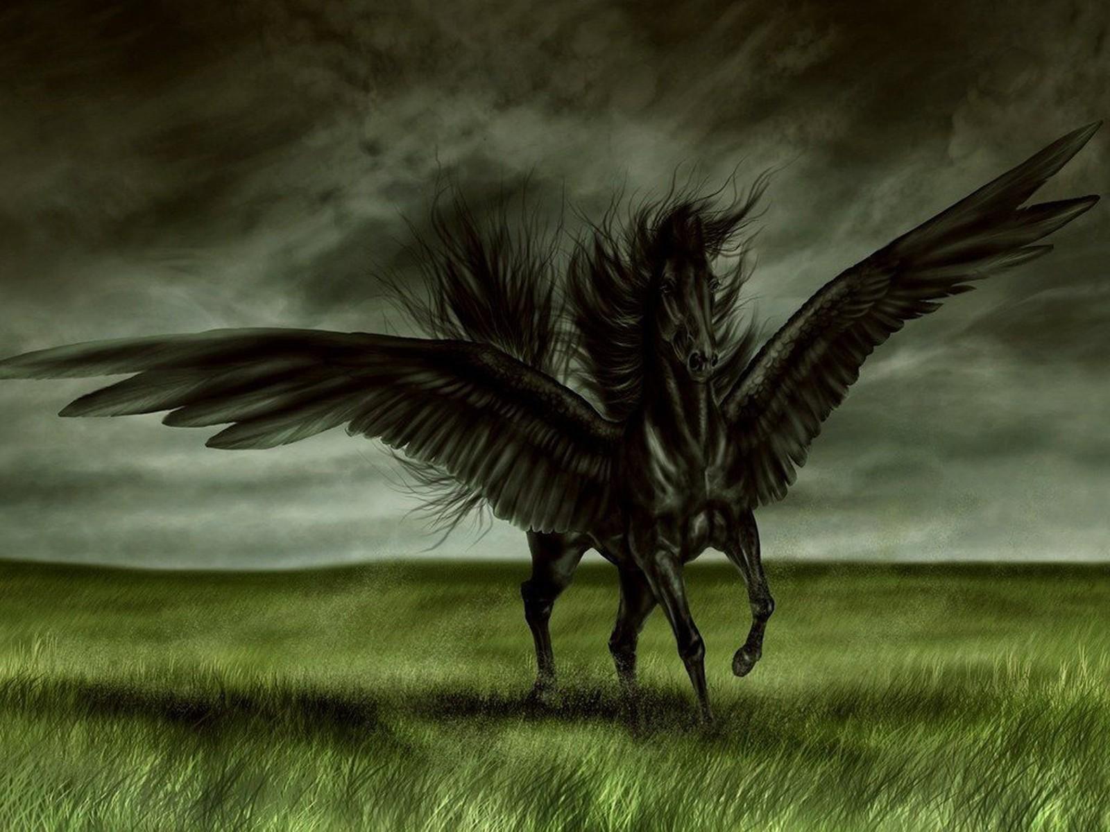 Black Horse Desktop Wallpapers 1600x1200