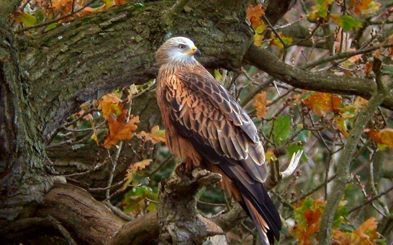 Eagle tree Wallpaper photo and wallpaper All Eagle tree Wallpaper 1440x900