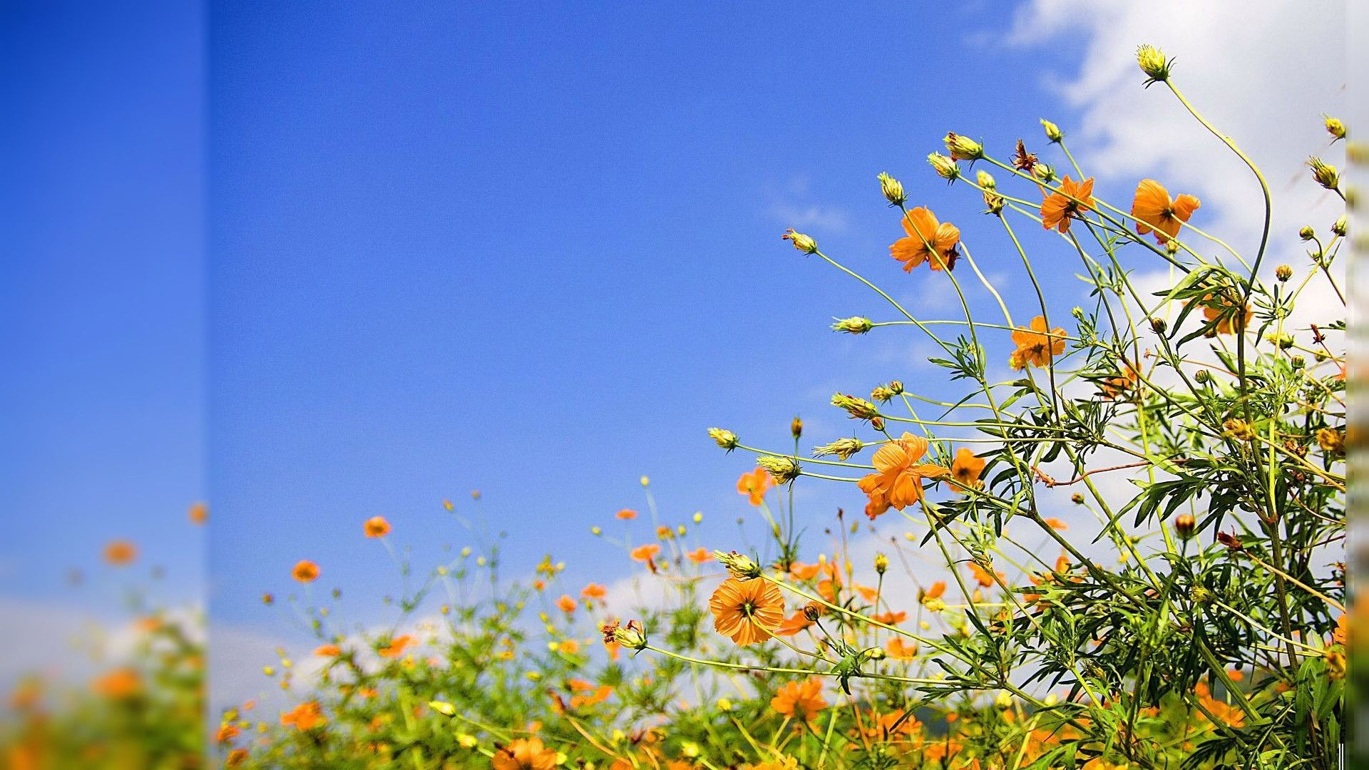 Download Free Spring Gallery Wallpaper 1920x1080   HD Wallpapers ...