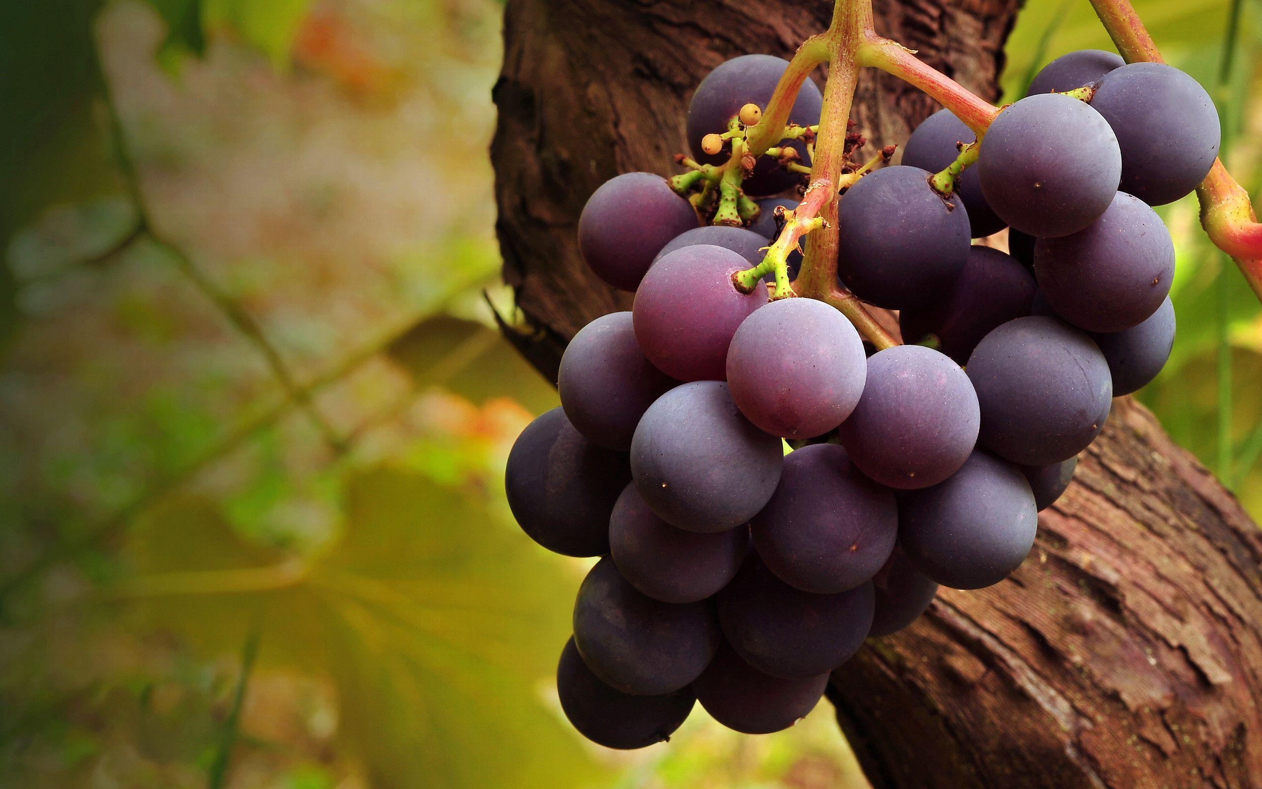 Wallpapers Grapes 2560x1600
