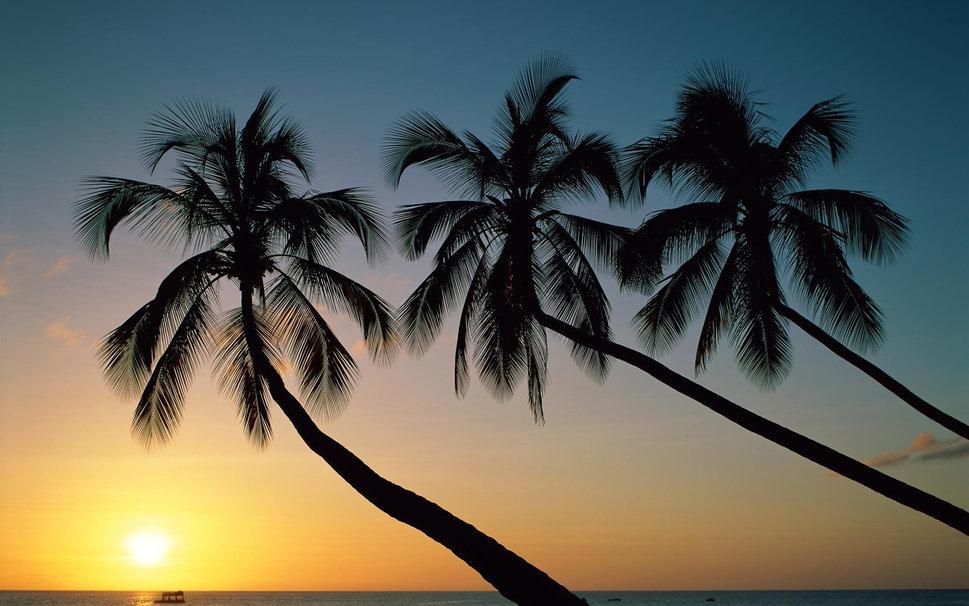Beautiful Palm Trees wallpaper   ForWallpapercom 969x606