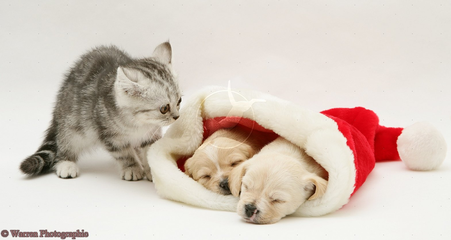 48 Cute Puppy And Kitten Wallpapers On Wallpapersafari
