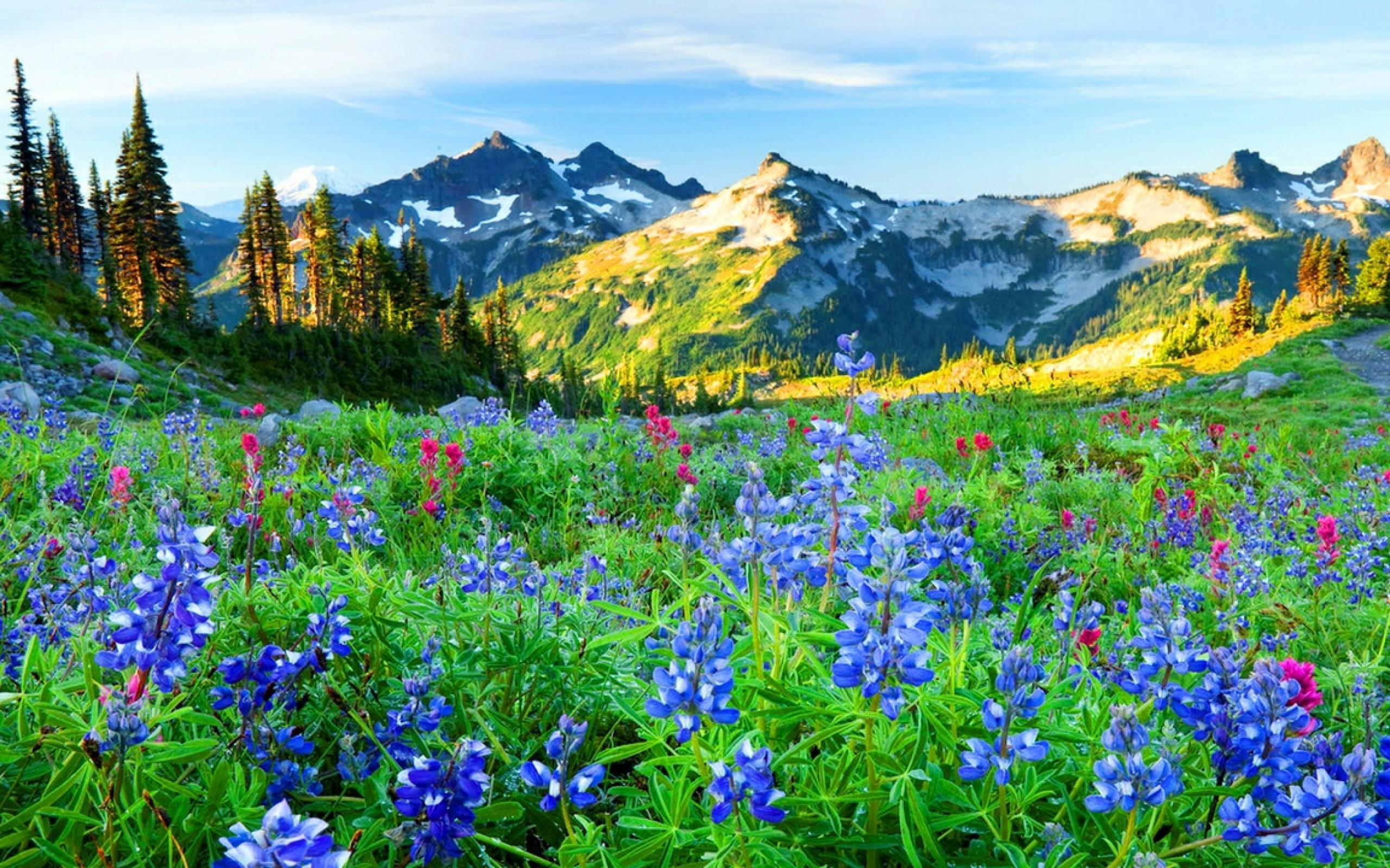 Mountain wildflowers Wallpaper