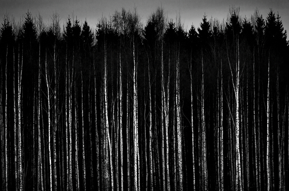 Black And White Pictures Anime Forest 12 Hd Wallpaper 947x626