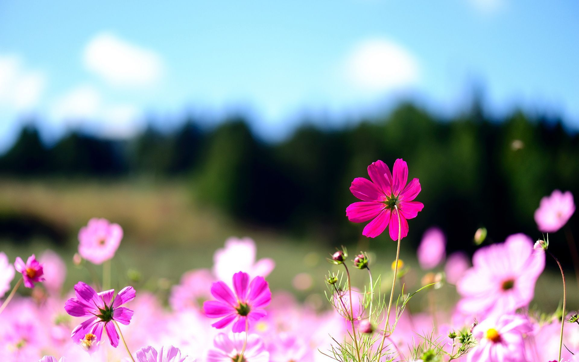 65 Free Flower Desktop Backgrounds On Wallpapersafari