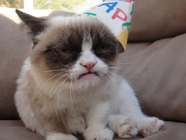 Grumpy Cat wallpaper 1440x1080 396688 WallpaperUP 1440x1080