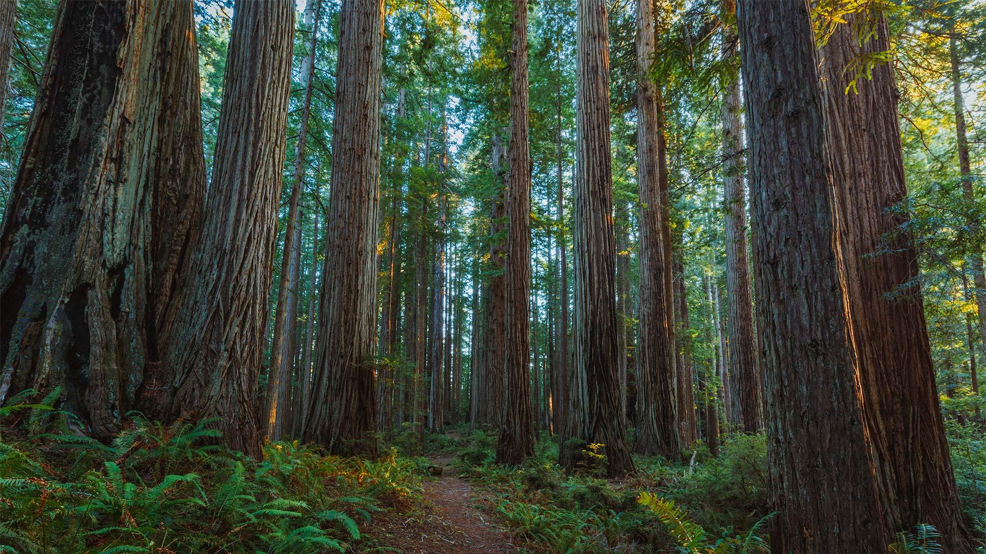 Prairie Creek Redwoods State Park   Wikipedia 1920x1080