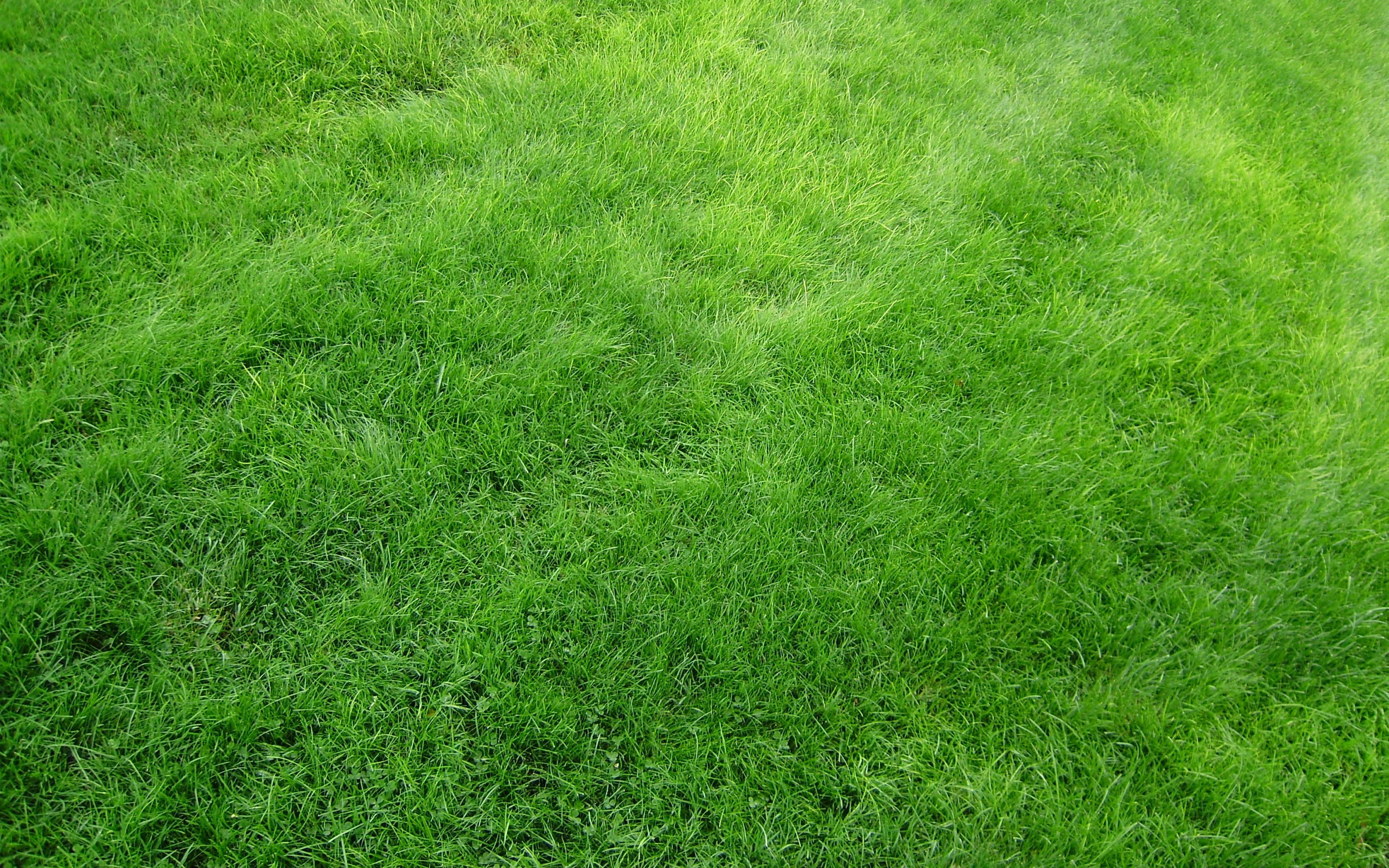 4k Wallpaper Grass Wallpapersafari HD Wallpapers Download Free Images Wallpaper [1000image.com]