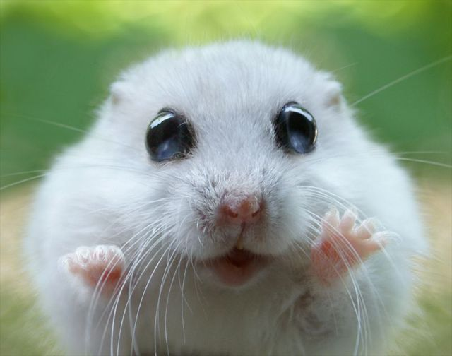 Funny And Cute Animals 13 Wide Wallpaper Wallpaper 640x504