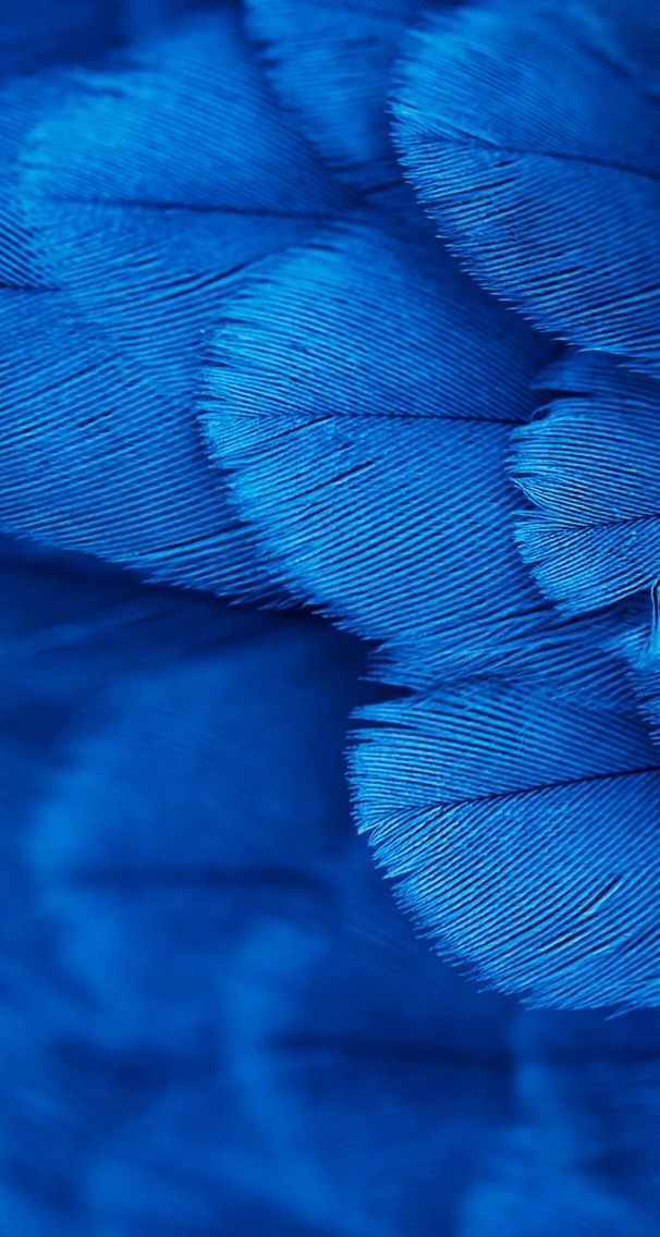 wallpaper background iphone blue feathers Backing papers 606x1136