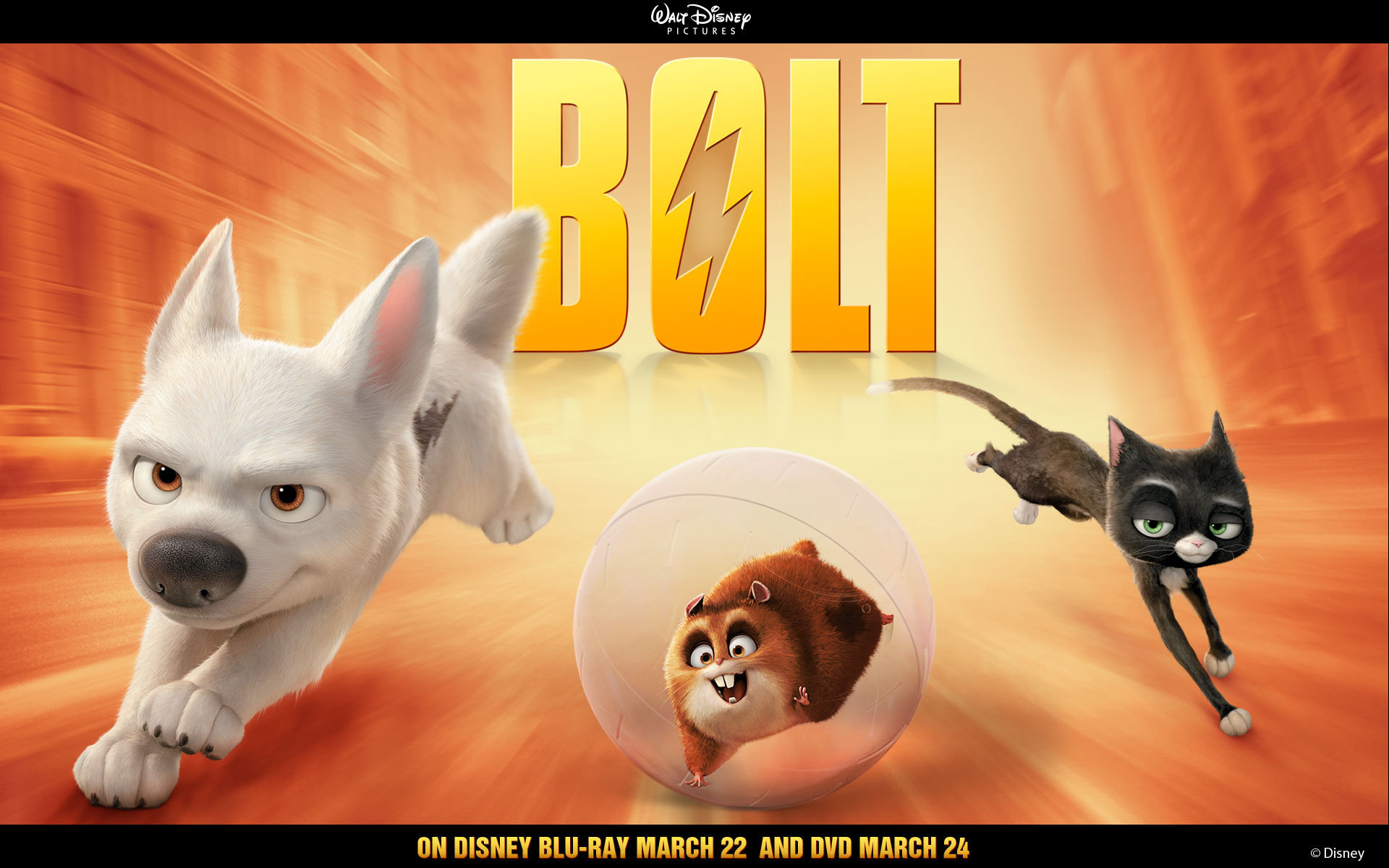 Bolt Trio   Disneys Bolt Wallpaper 5272616 1920x1200