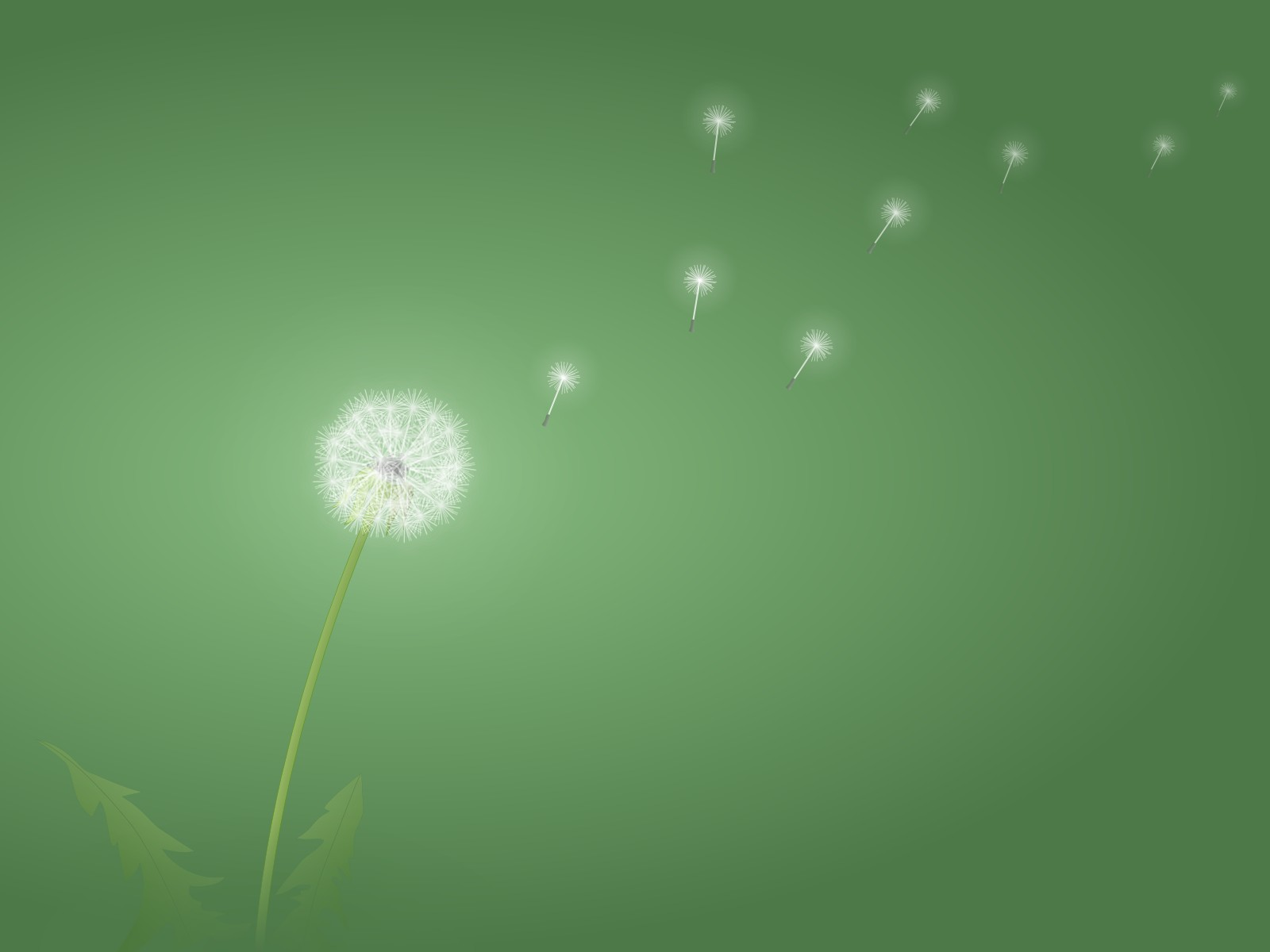 1600x1200 Dandelion desktop PC and Mac wallpaper 1600x1200