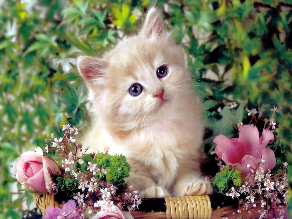 Baby Animals images baby kittens HD wallpaper and background photos 1024x768