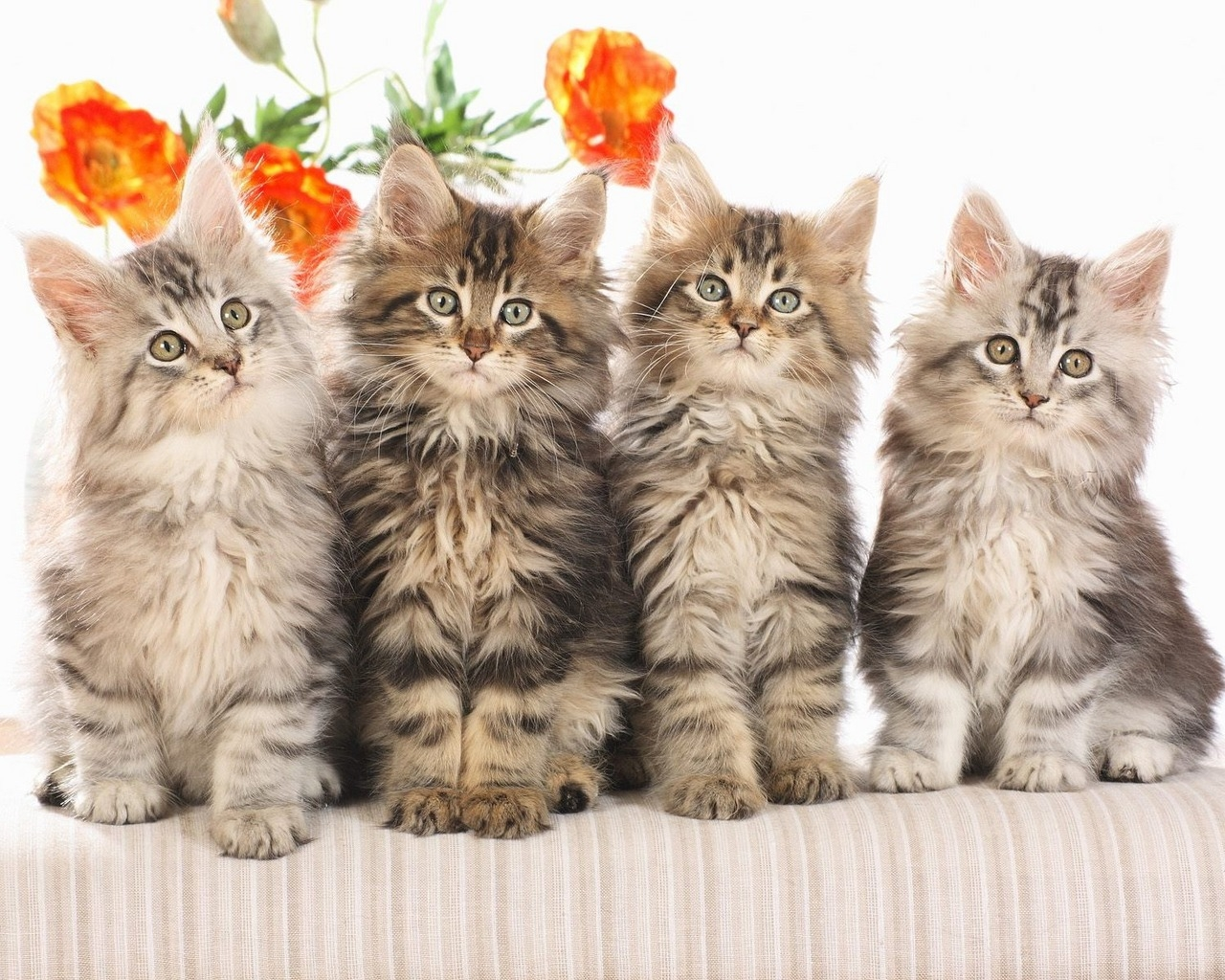 Cat   Wallpapers Pictures Pics Photos Images Desktop Backgrounds 1280x1024