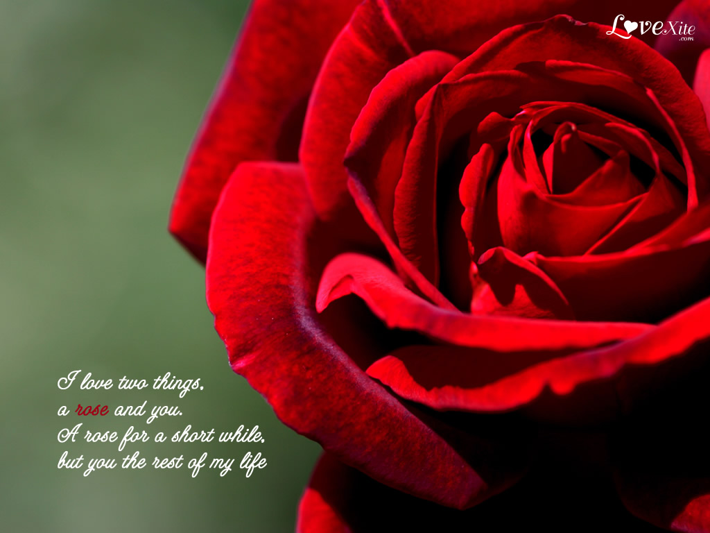Romantic Love Wallpapers With Quotes QuotesGram 1024x768