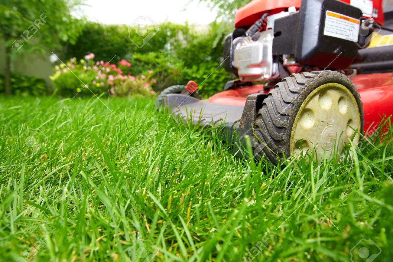 Lawn Mower Cutting Green Grass In BackyardGardening Background 1300x866