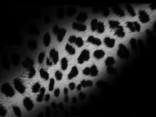60 Most Beautiful Apple Mac OS X Leopard Wallpapers   Hongkiat 500x375
