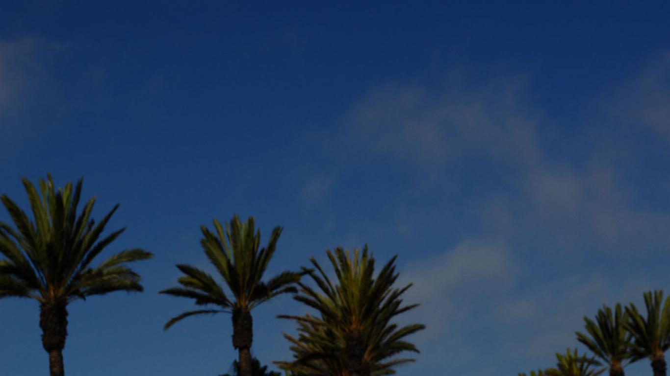 palm tree miami florida palm trees california landscpae trees 1366x768