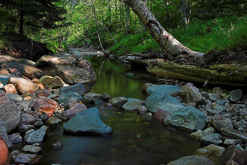 From Spring Creek in Wisconsin 816x544