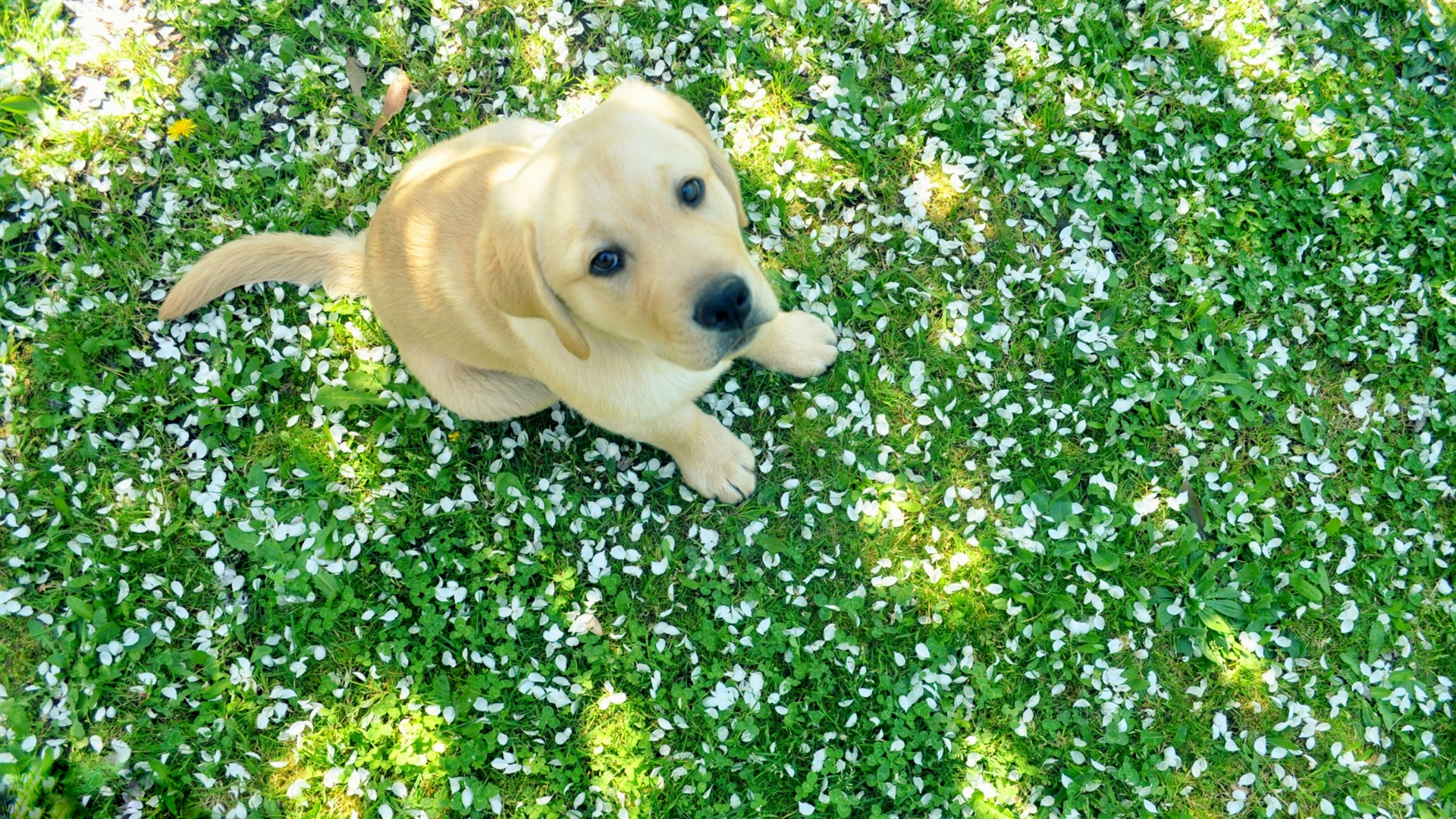 dog and spring Animal Widescreen Wallpaper HD Wallpaper Background 1920x1080