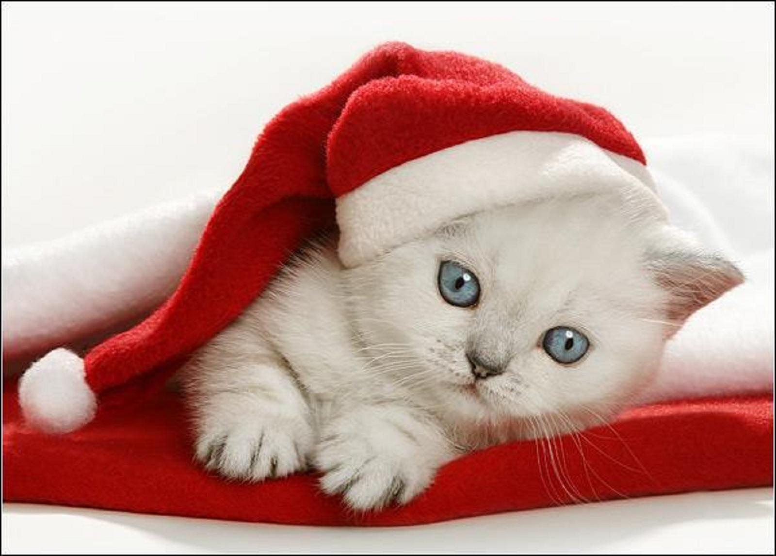 Christmas Kitten wallpaper   ForWallpapercom 1600x1146