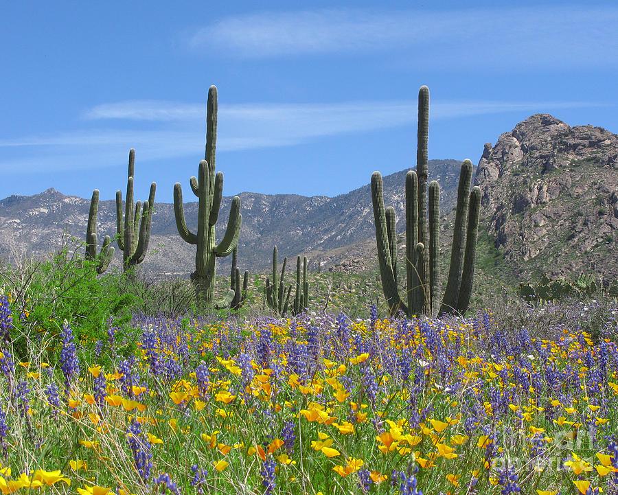 Spring Flowers In The Desert by Elvira Butler   Spring Flowers In 900x721
