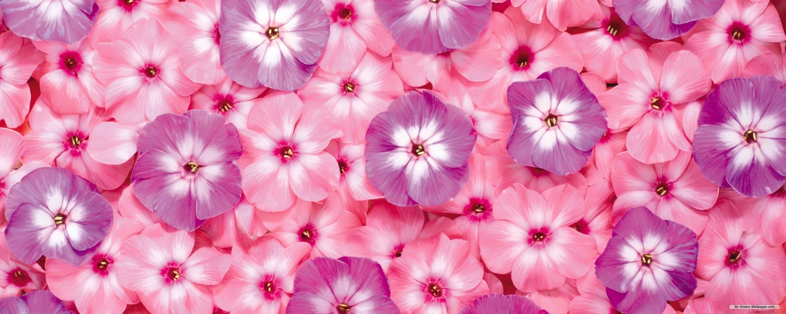 Pin Flower Wallpaper Dual Screen 2560x1024