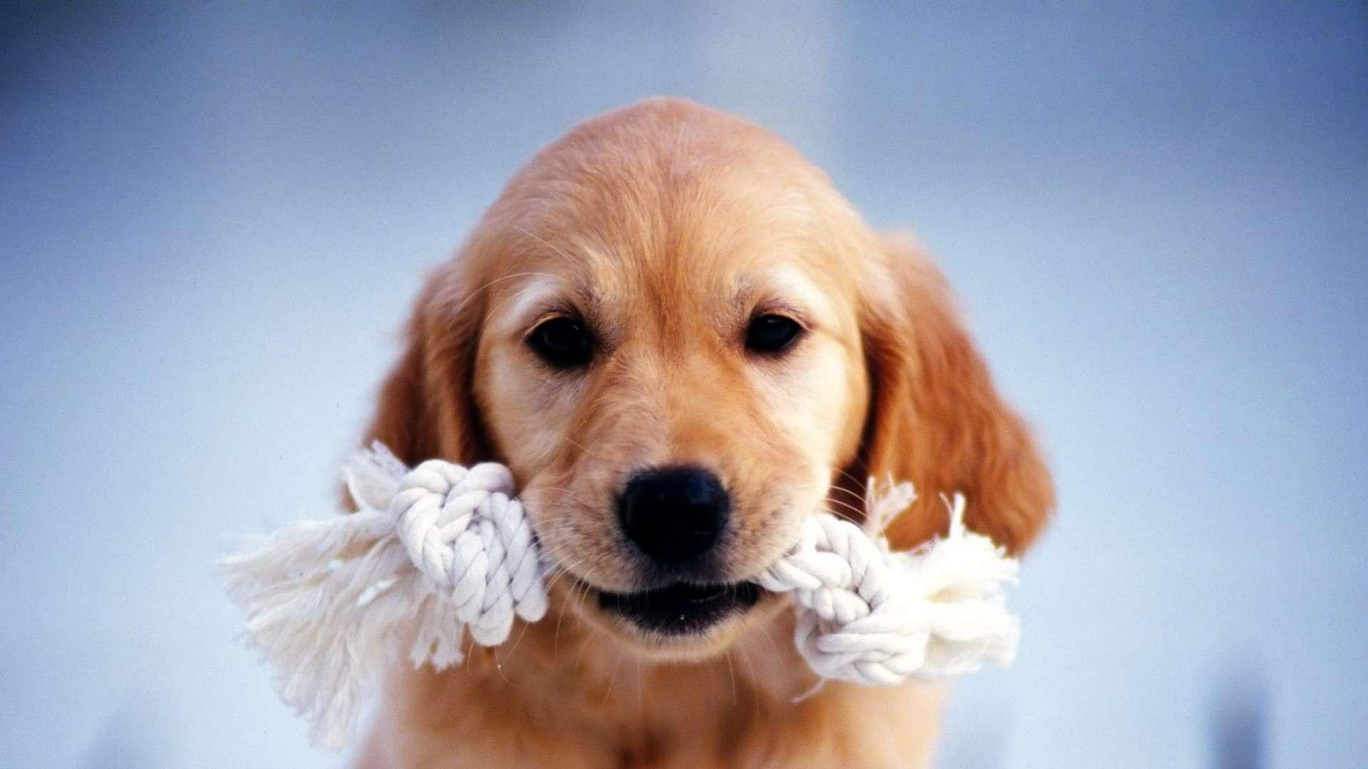 Cute HD Dachshund Puppies Wallpaper HDWallWidecom 1920x1080