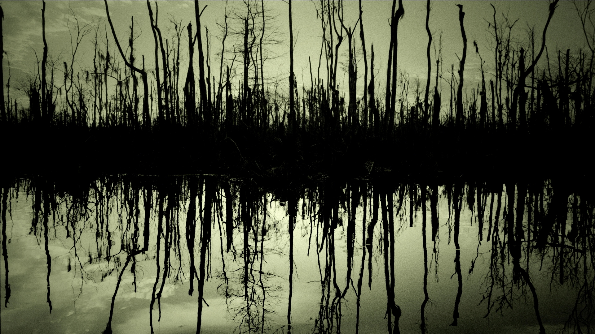 wallpapers wallpaper swamp trees winter background images 1920x1080