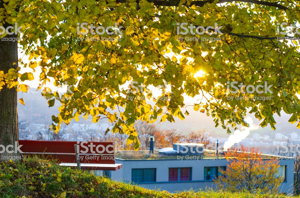 Bench Under A Tree In Autumn Backlit City Vista In The Background 1024x678