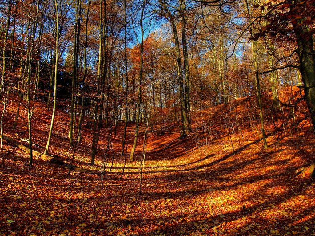 Fall Colors Wallpaper | wallpaper, wallpaper hd ...