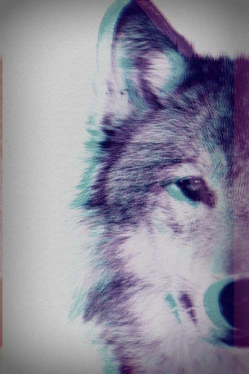 runnin with wolves under the full moon 500x750