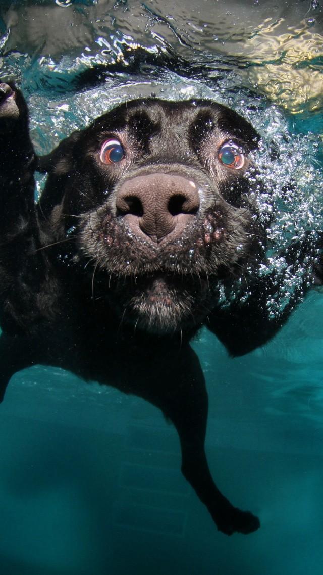 Wallpaper Dog 5k 4k wallpaper puppy black underwater funny 640x1138
