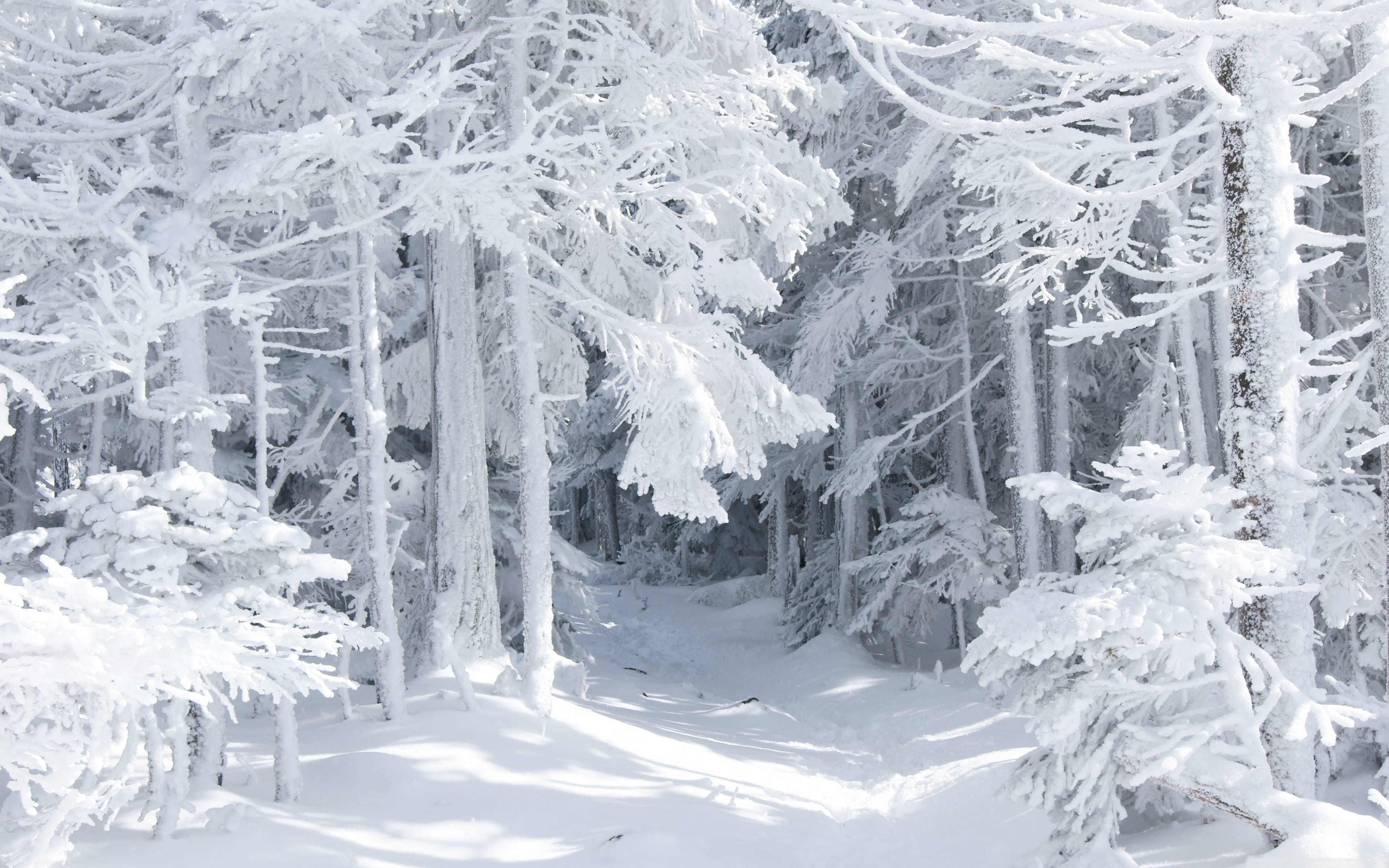 Snow white wood wallpapers and images   wallpapers pictures photos 3840x2400