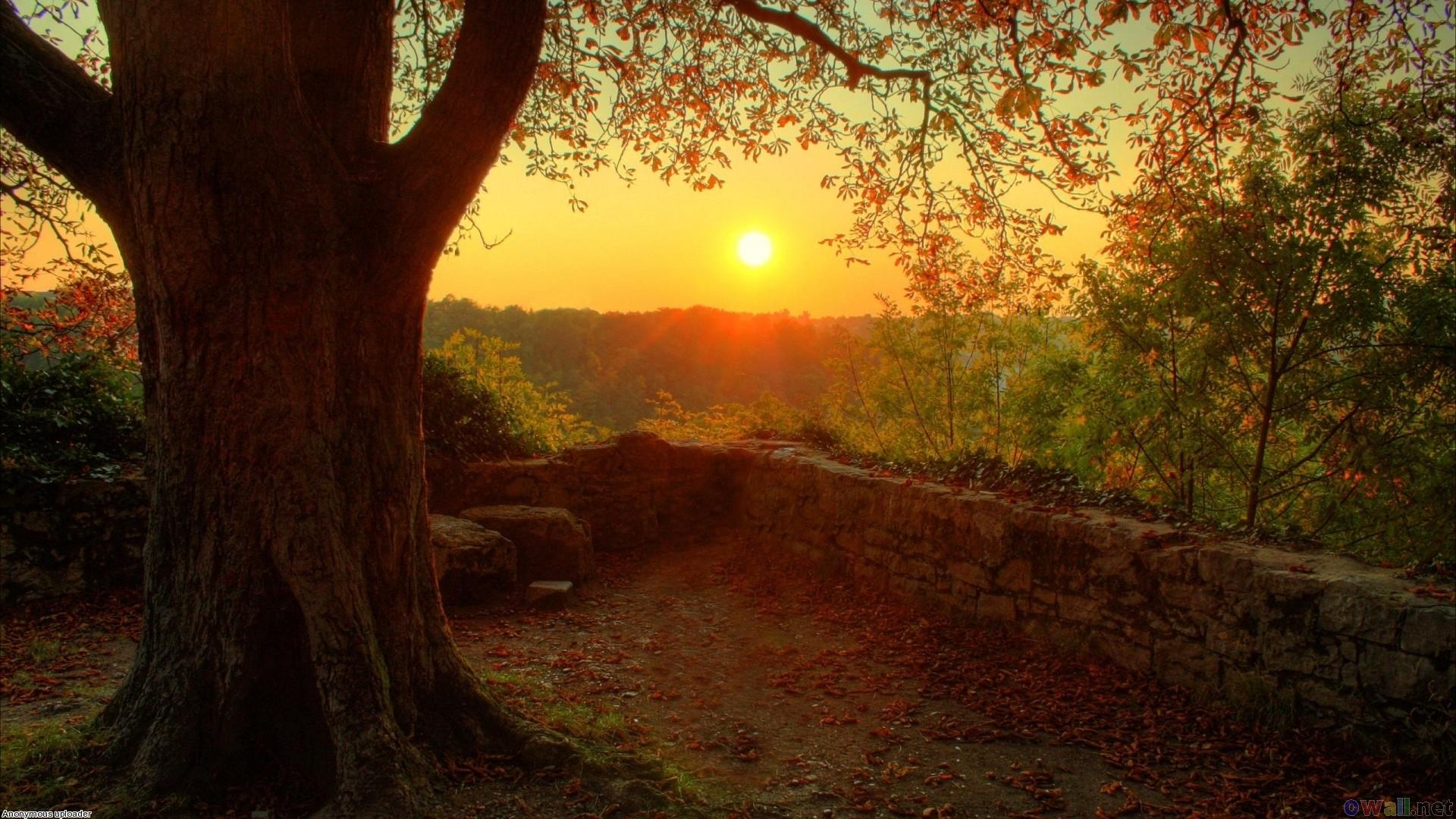 Autumn warm light wallpaper 17573   Open Walls 1920x1080