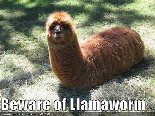 Funny Llama wallpaper Funny Animal 500x375