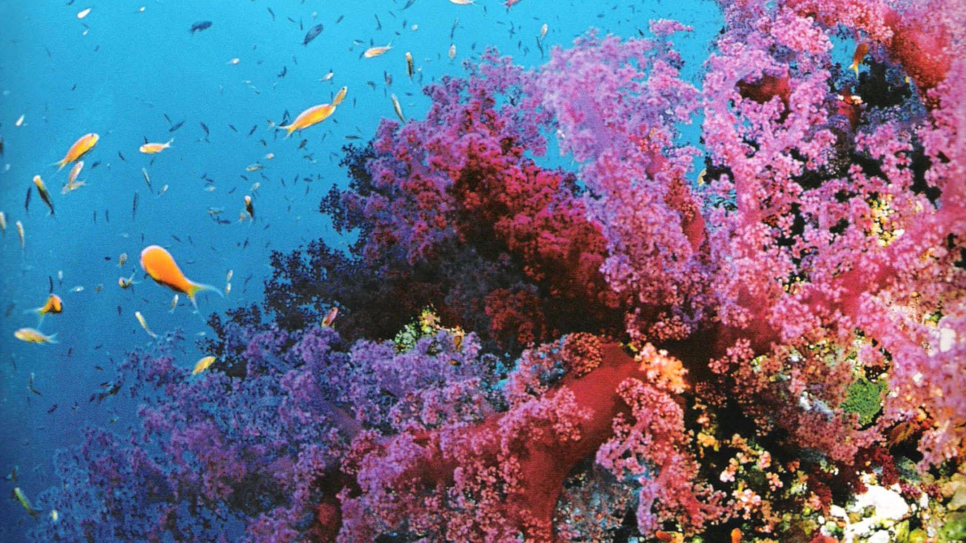 Great Barrier Reef Wallpaper Wallpapersafari HD Wallpapers Download Free Images Wallpaper [1000image.com]