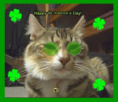 St Patrick Wallpaper: St Patrick's Day Cat Wallpaper