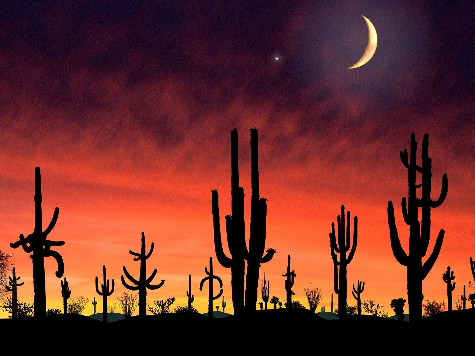 55 Saguaro National Monument Sunset Wallpapers   Download at 1600x1200