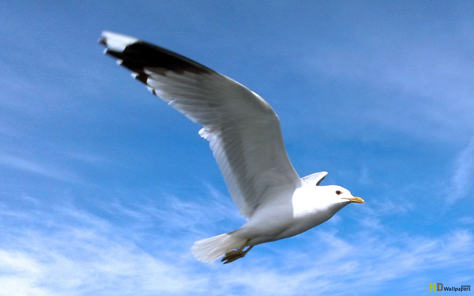 Bird Flying Wallpapers Sea Backgrounds 1600x1000