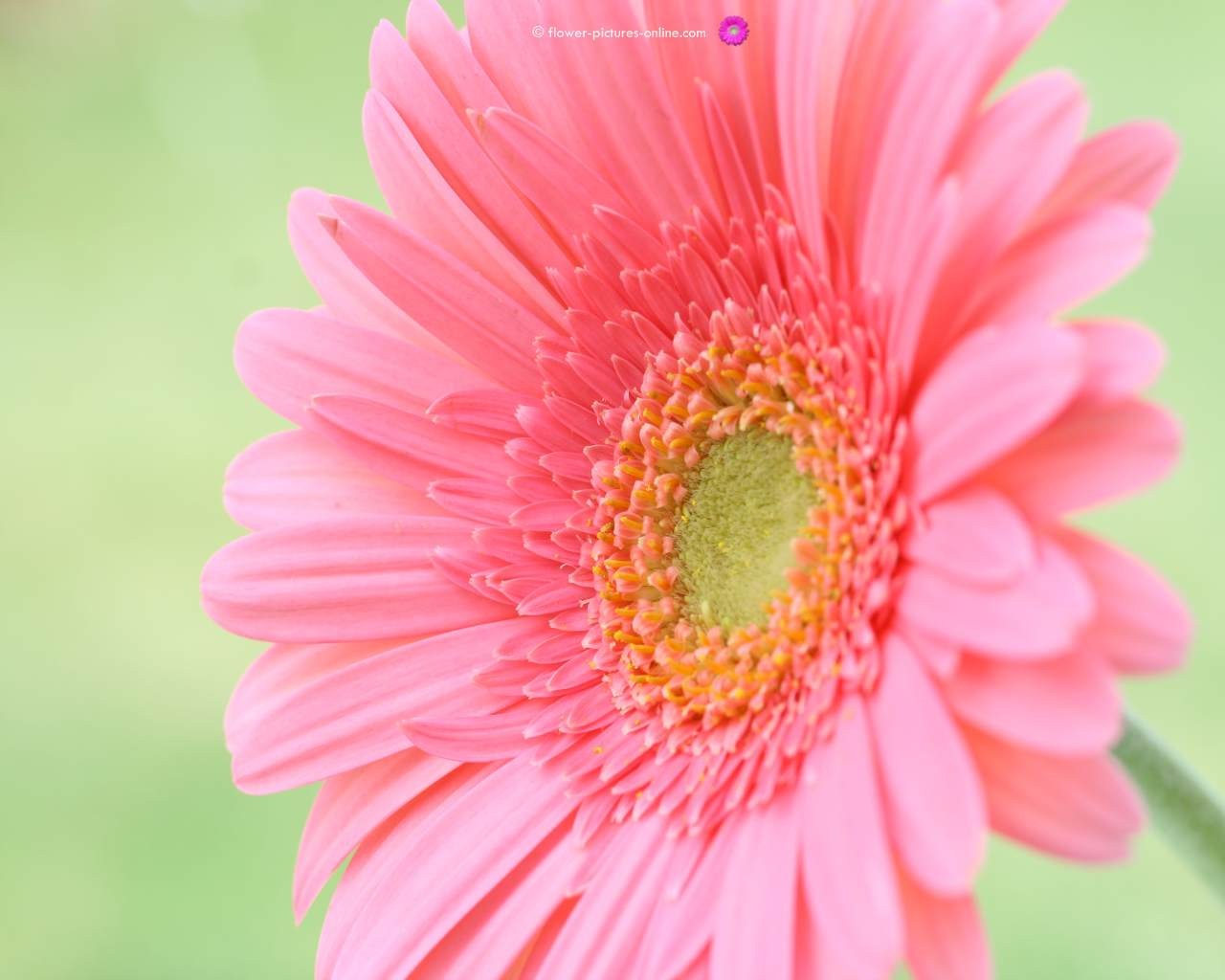 flower wallpaper for desktop flower wallpaper for desktop 1280x1024